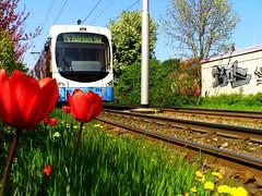 Rohrbach Süd (°jotha°) Tags: graffiti heidelberg frühling tulpen schienen löwenzahn bahnstrecke strasenbahn jothafoto jothaart
