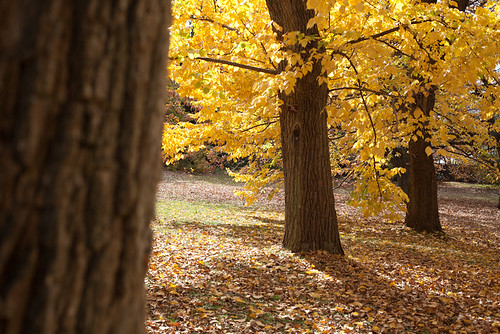 """Fall"" at the Royal Hobart Botanical Gardens by BrendanDav"
