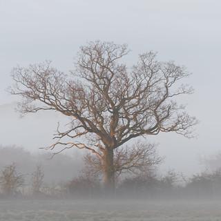 mist and sun (explored 17/2/17)
