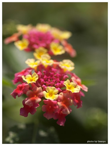 Flowers 091016 #03