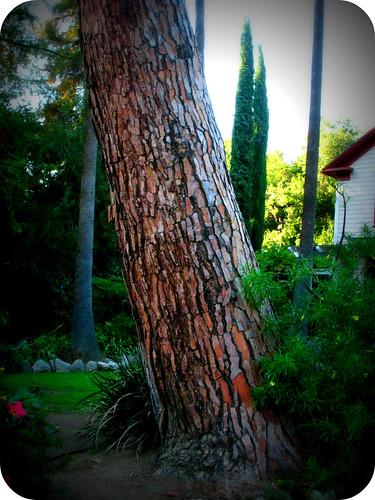 TREE SKIN