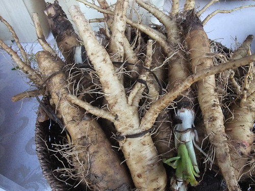 Salsify from Wayward Seed Farm 10/10/09