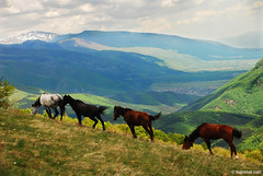 wild horses in Central Balkan National Park ,      (.:: Maya ::.) Tags: park wild horse mountain eye nature landscape maya central bulgaria national balkan bulgarie bulgarien        mayaeyecom mayakarkalicheva  wwwmayaeyecom