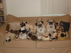 No more stuffed pugs for Christmas