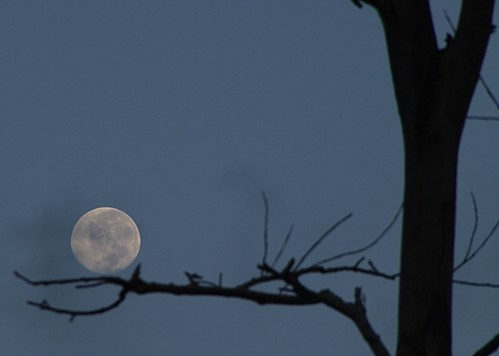 Reaching for the Moon 1