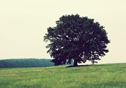 フリー画像| 自然風景| 樹木の風景| 草原の風景| 緑色/グリーン|       フリー素材|