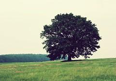 [フリー画像] [自然風景] [樹木の風景] [草原の風景] [緑色/グリーン]       [フリー素材]