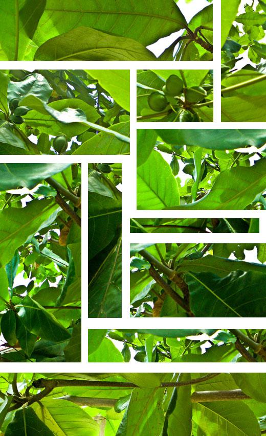 greenery jpeg