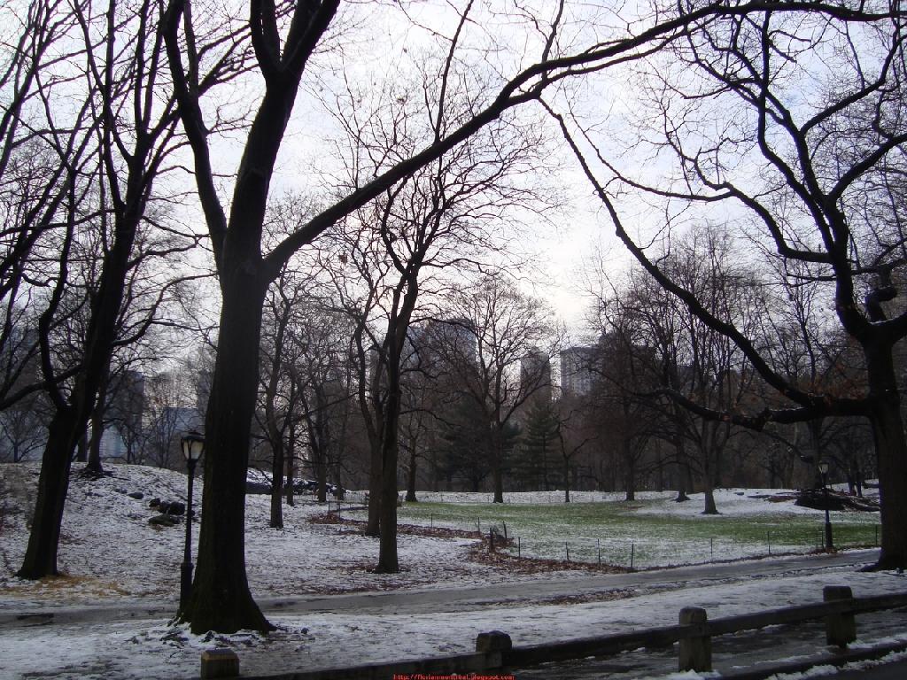 2010-01-01_013