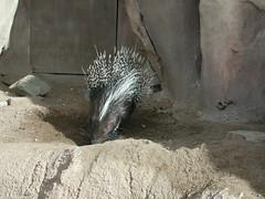 Zoo of Denver  DSCN0032