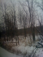 New York Woods