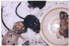 the whole family (lacey k) Tags: family cute 35mm gerbil