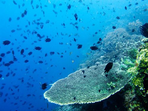 Bunaken Underwater 15