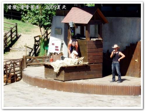 唐妮可☆吃喝玩樂過生活 拍攝的 20090802_清境青青草原28。