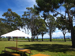 Cloudy Bay Vineyard Grounds