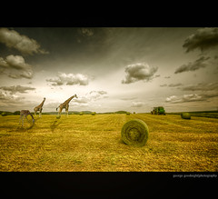Global Warming (George Goodnight) Tags: africa light sky nature field clouds photoshop germany landscape nikon manipulation giraffe toto haybale globalwarming nikond300 georgegoodnightphotography