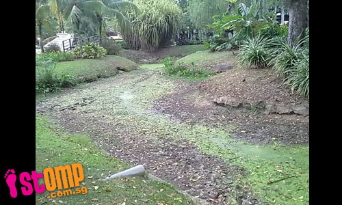 Pond at Tiong Bahru park completely dries up under hot weather