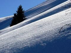 Pini  Montecampione  Italy (felix cat 46) Tags: winter italy snow mountains nature alberi landscape natura neve paesaggio naturalmente montecampione