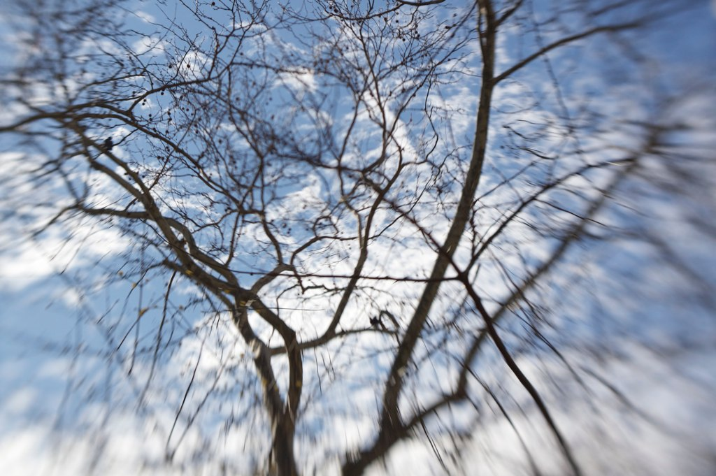 Taken on the East River looking up at a tree taken with a LensBaby