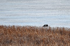 Otters Looking by Mully410 * Images