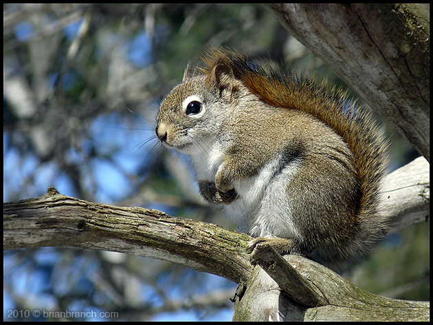 P1080958_squirrel