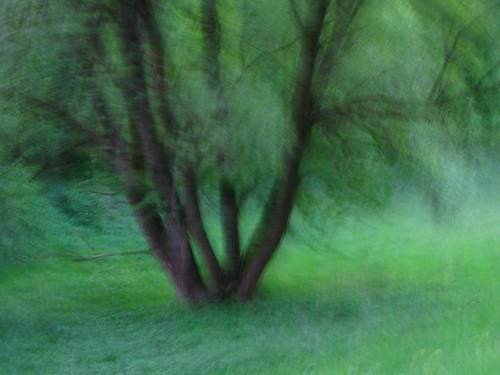 GreeninMotion