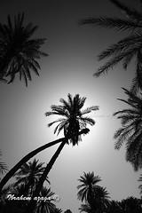 (Azaga ) Tags: life light bw black color canon desert libya   50d  sebha  ibrahem  ghademes   azaga