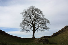 "Sycamore Gap • <a style=""font-size:0.8em;"" href=""http://www.flickr.com/photos/11477083@N00/4509812353/"" target=""_blank"">View on Flickr</a>"