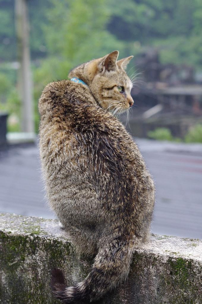 是貓~是貓~是貓耶(侯硐)