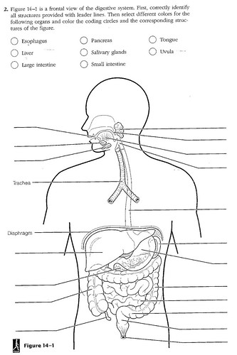 Human Digestive System Diagram Worksheet - Worksheets