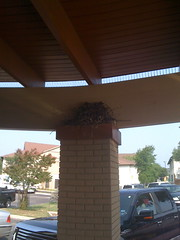 Bird nesting atop spikes