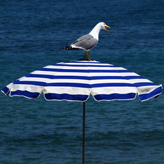 Io vado a votareeeee!!! (DanielaNobili) Tags: blue sea summer beach stripes seagull clear beachumbrella colorphotoaward danielanob artistoftheyearlevel3 availablethroughgettyimages