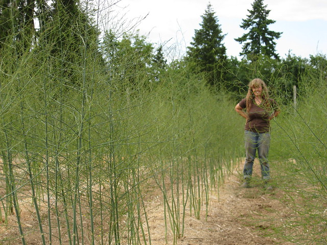 Jill in the Asparagus