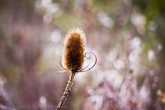 Autumn Sunlight (Paul Shobrook) Tags: ruffordpark uk wildlife autumn