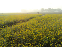 Mother & Child (deborshi biswas) Tags: mother child love winter wintermorning mustard rurallife countryside bangladesh