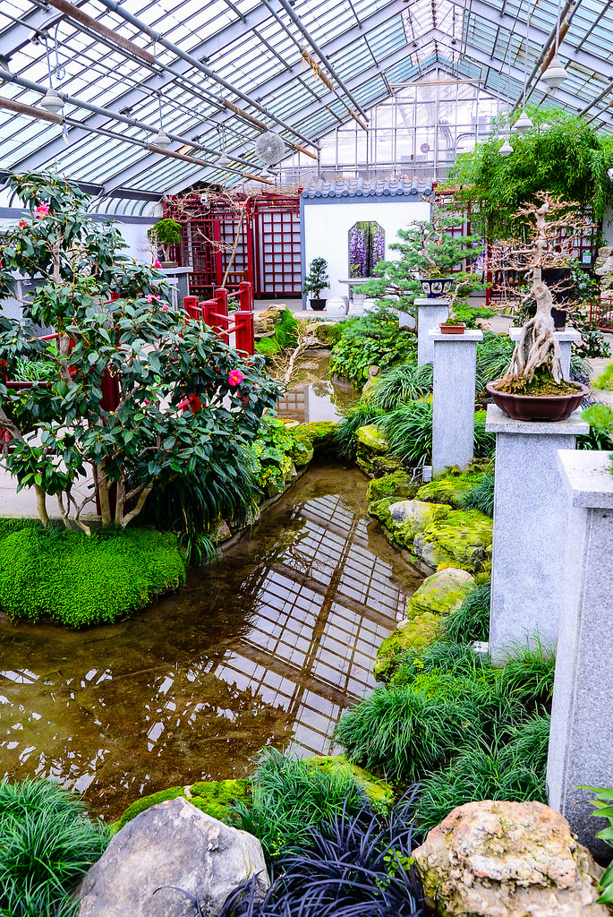 The world 39 s best photos of bonsai and plant flickr hive mind for Indoor japanese garden plants