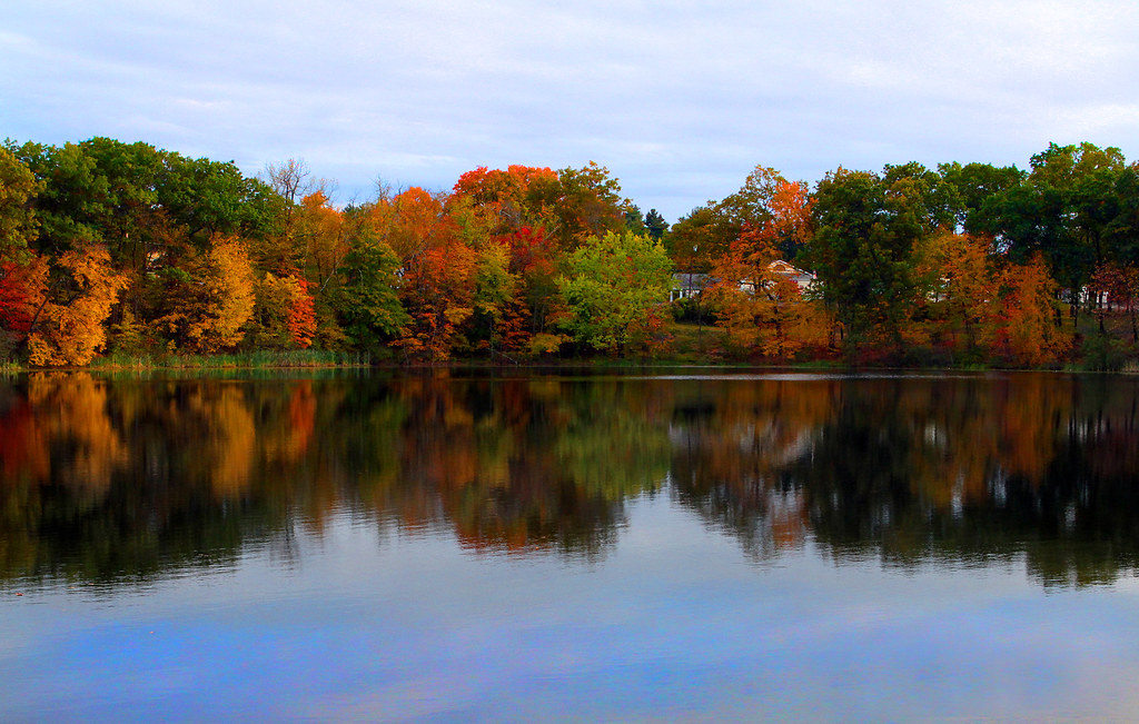Spec Pond Fall Foliage Wilbraham Ma.