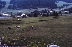 Scan10368 (lucky37it) Tags: e alpi dolomiti cervino
