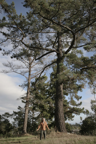 Pops&trees