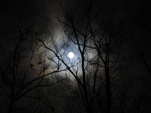 trees night moon blotch - photo #17
