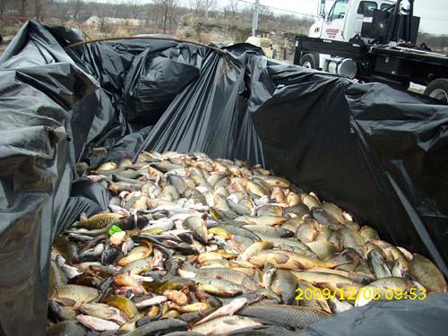 common carp. Canal were common carp.