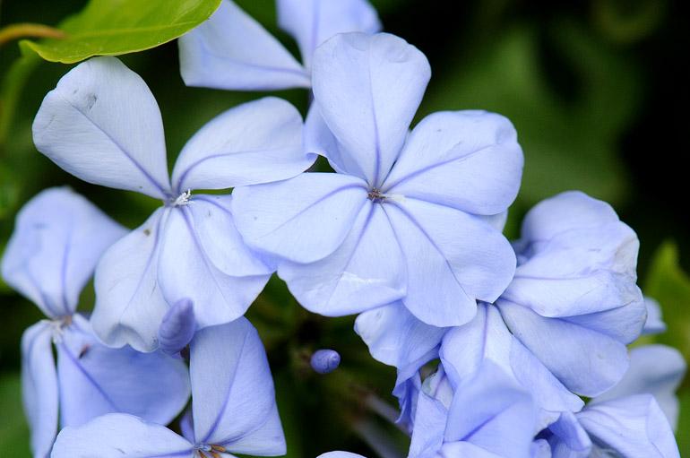 blue_0010