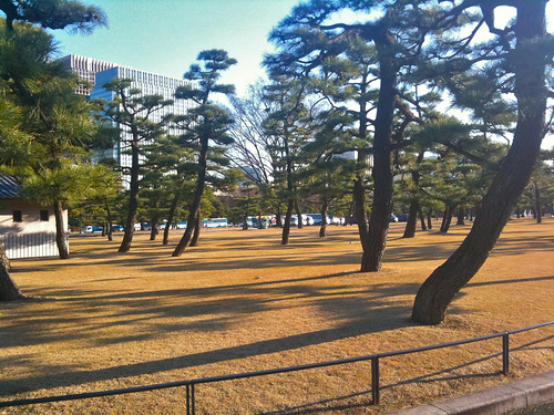 Imperial Palace Trees