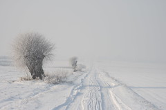 white winter country road ((:Andrzej:)) Tags: road winter white cold tree poland zima droga nieg mrz drzewa polna zimno sooc wierzba