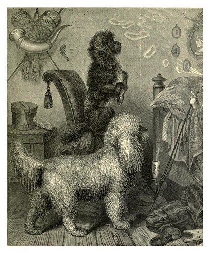004-Caniches alemanes-The illustrated book of the dog 1881- Vero Kemball Shaw