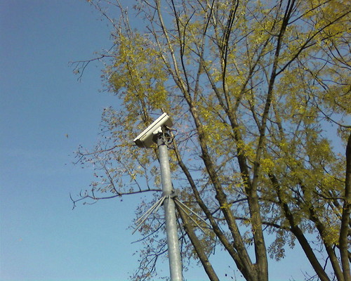 CCTV cameras in trees