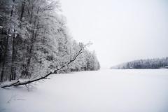 Hunttijärvi shore 3 (MikeAncient) Tags: trees winter lake snow tree ice nature forest finland landscape geotagged naturephotography saari mäntsälä haukankierros hunttijärvi