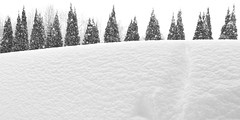 View from a Snowdrift
