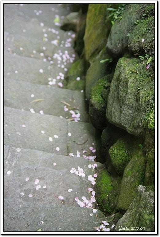 天元宮,櫻花 (19)