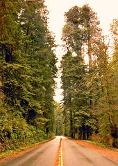 Newton B Drury Scenic Parkway (kmanohar) Tags: california northerncalifornia highway worldheritagesite director humboldtcounty highway101 redwoodnationalpark us101 drury scenichighway ushighway101 northerncaliforniacoast nationalparksservice temperaterainforest prairiecreekstatepark prairiecreek redwoodpark prairiecreekredwoods redwoodcoast humboldtcountyca humboldtcountycalifornia prairiecreekredwoodsstatepark redwoodsstatepark pacificrainforest savetheredwoodsleague klamathcalifornia scenicparkway prairiecreekpark california101 internationalbiospherereserve redwoodpreserve newtonbdruryscenicparkway californiarainforest northwestrainforest redwoodreserve newtonbdrury newtondrury californiadrury newtonbdruryscenichighway drurycalifornia savetheredwoodsleage